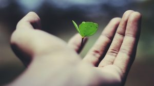 floating green leaf plant on persons hand